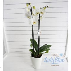 Orhidee G2