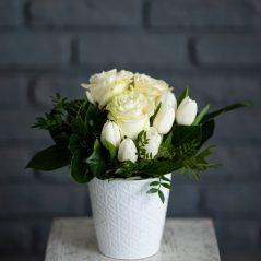Flori albe in vas AF683