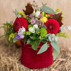 Flori de toamnă